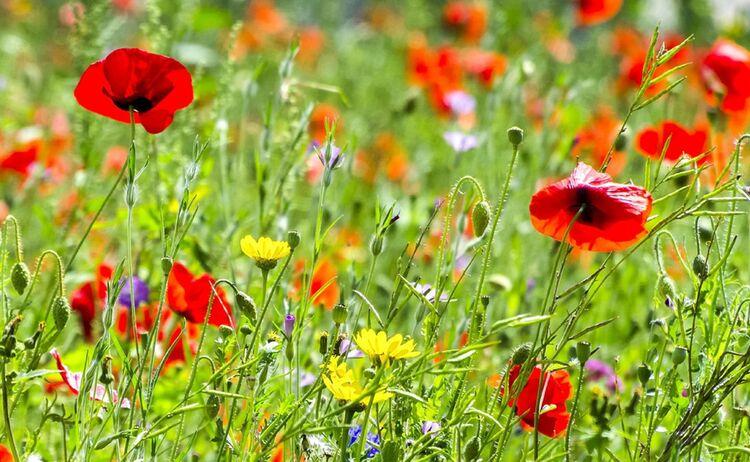 Blumenwiese 5