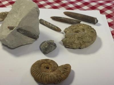 Fossilien, Foto: Touristikzentrum Westliches Weserbergland