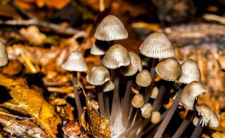 Pilze 7 Buescher