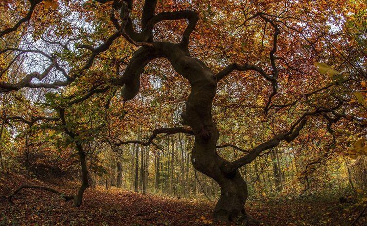 Suentelbuche Herbst 1